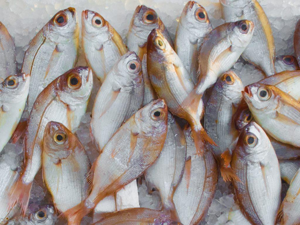 Ilustrasi ikan laut